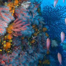 Paysage coralligène dans la partie marine de Jbel Moussa