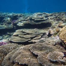 5. Coral reef in Zamami Island