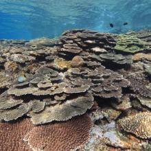 7. Coral reef in Tokashiki islad