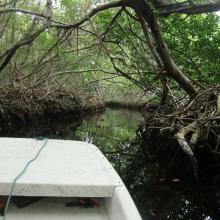 Mangrove creek Lac Baai