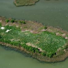 Gull colony on Korom Island at Lake Fehér