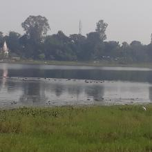 Congregation of water birds at Parvati Arga Bird Sanctuary