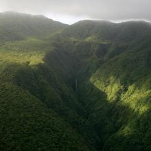 Interior of O Le Pupū Puē National Park