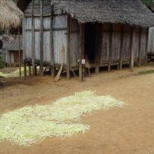 Maison traditionnelle à Nosivolo avec séchage de Raphia
