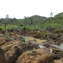 Destruction des marécages (forêt de raphia) par l'orpaillage et la construction de la rizière