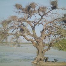Le lac Higa, un lieu de nidification de nombreuses espèces d'oiseaux