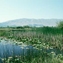 Lake Shkodra and River Buna Ramsar Site