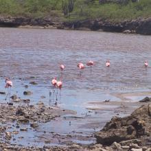 Flamingo's at Salina Slagbaai, part of Washington Slagbaai