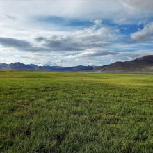Pasturelands in the Tso Kar basin, during the short summer season.