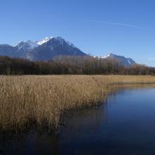 Roselière et lac Savies
