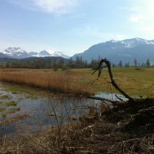 Ramsar site no. 509: Kaltbrunner Riet