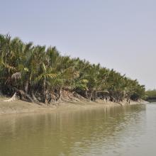 Sundarban Wetland