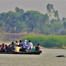 Indus River Dolphin following country boat at Karmowala village.