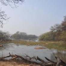 Landscape view of Sultanpur National Park