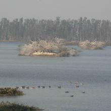 Bhindawas Wildlife Sanctuary