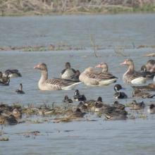 Congregation of waterfowls at Saman Bird Sanctuary