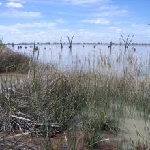 Kerang Wetlands Ramsar Site