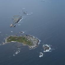 Runde, Grasøyane