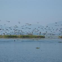 Birds at Inlay Lake