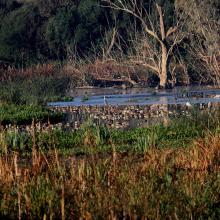 Importance du site Biodiversité Et Richesse spécifique hivernage