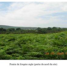 Prairie de fougère aigle (partie du nord du site)