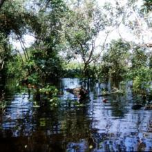 Selva Baja Inundable