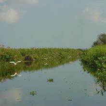 Arroyo hediondo es la única conexión por donde ingresa la marea y ingresan los manatís al complejo de pantanos