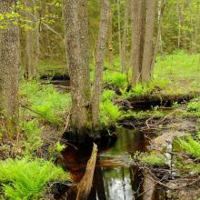 The Reserve holds many natural small rivers, surrounded by swampy black alder forests.