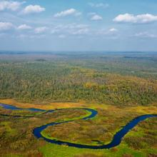 The left bank of the upper reaches of the Berezina River is occupied by a huge forest-swamp massif with a predominance of natural complexes undisturbed by man.