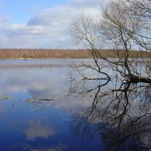 During the spring flood period the Berezina River floods the whole floodplain and surrounding swampy forests; the flood reaches a width of 2-4 km.
