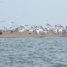 Diversité aviaire de la RNCP