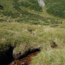 A rivulet in the boggy cirque between the mounts of Hoverla and Breskul