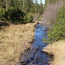 Stream running through peat bog