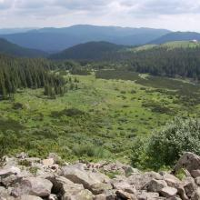 View on Tsybulnyk forested/shurbed peat bog