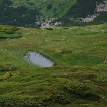 Wetland area in the alpine belt of Chornohora massif