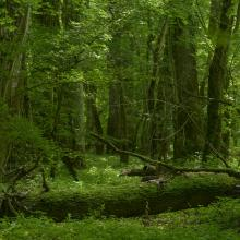 Floodplain (riverine) forest