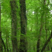 "Oak-ash forest in ""Atak"" area"