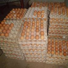 Oeufs produits dans la ferme