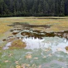 peatbog in the Tatra National Park