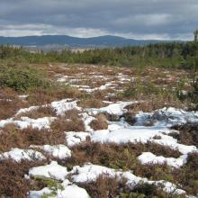 The active bog in the central part of the site