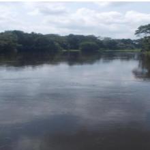 La rivière Kouyou en amont (vers Ngoko)