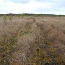 Transition bog
