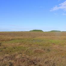 Open bog landscape with mineral islands