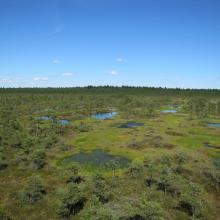 Männikjärve bog from tower