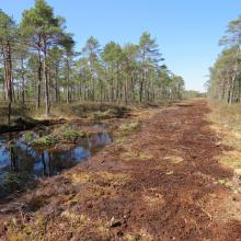 Habitats restoration - closing the ditches