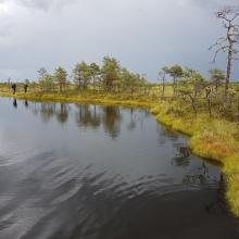 Bog pool in Kuresoo, Soomaa NP