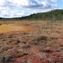 Raised bog margin with hollows and Sphagnum mosses