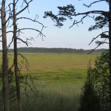 View to the bog