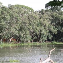 lac habitat des oiseaux