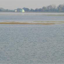 Open water habitat